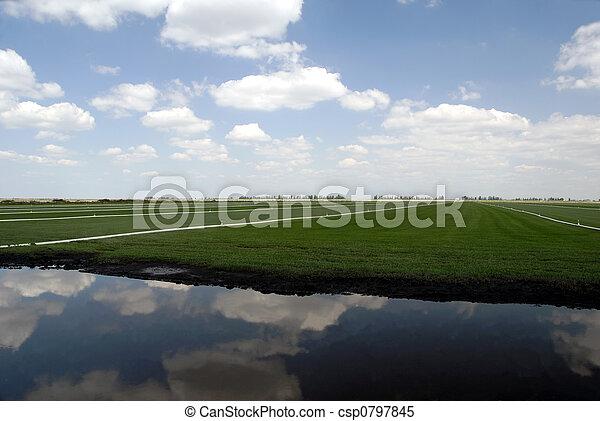 Sod Farming - csp0797845