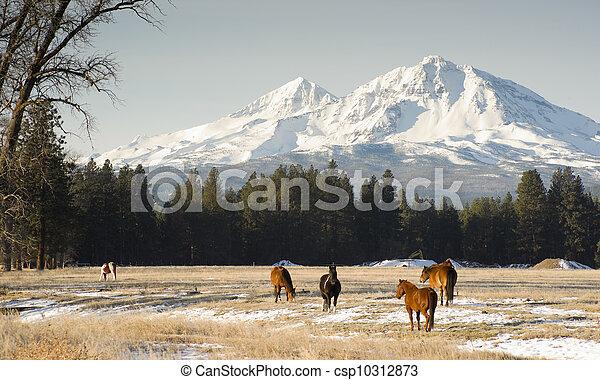 soeurs, ranch - csp10312873