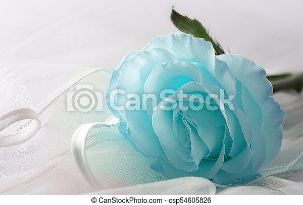 Soft blue color Rose on a light background - csp54605826