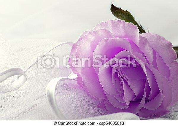 Soft color. Purple Rose on a light background - csp54605813