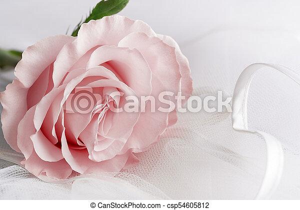 Soft color Rose on a light background - csp54605812