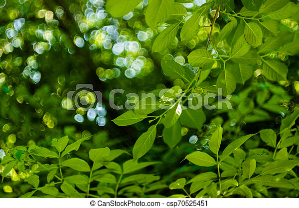 Soft sun light through the foliage of the trees in soft selective focus against background of blurry foliage and blue sky. Close up branch of tree with brightly green leaves. Place for your text - csp70525451