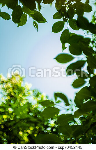 Soft sun light through the foliage of the trees in soft selective focus against background of blurry foliage and blue sky. Close up branch of tree with brightly green leaves. Place for your text - csp70452445