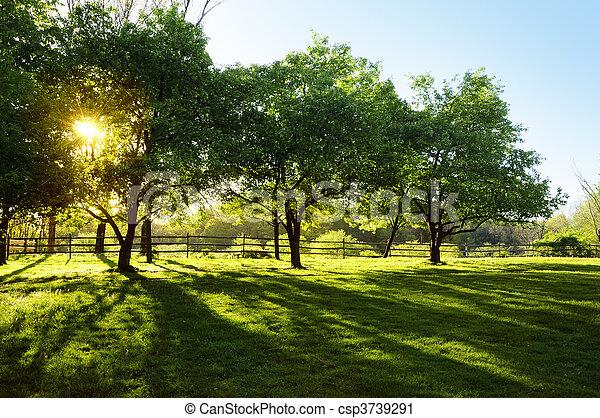 sol, através, árvores, brilhar - csp3739291