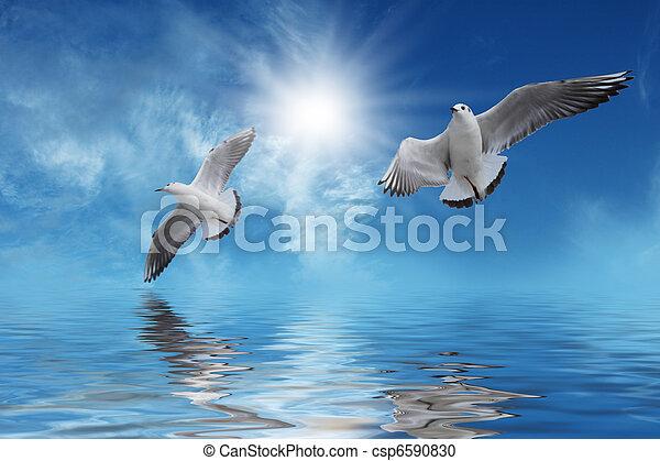 sol, branca, voando, pássaros - csp6590830
