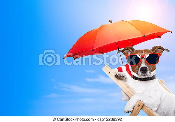Bañarse con un perro en una silla con espacio vacío al lado - csp12289392
