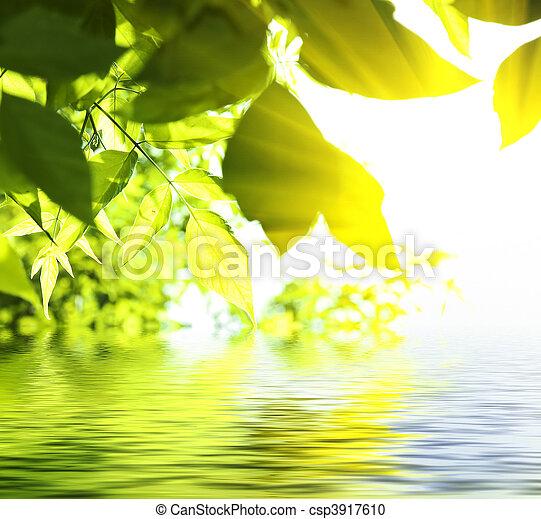 sol, folhas, vidoeiro, céu, profundo, floresta, sob - csp3917610