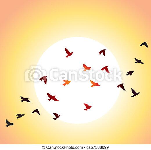 sol, luminoso, voando, pássaros - csp7588099