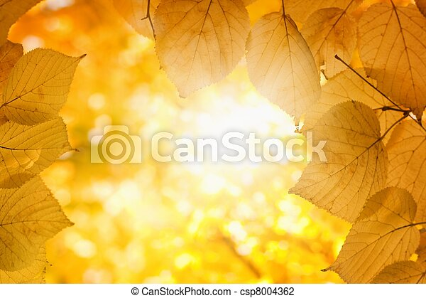 sol, outono - csp8004362