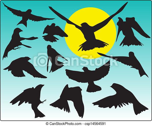 Pájaros en vuelo contra el sol - csp14564591