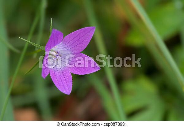 Cerca de una sola flor - csp0873931