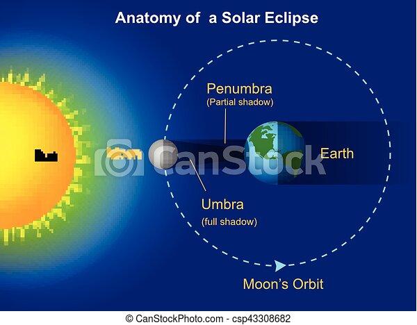Vector Illustration Of Solar Eclipse Diagram