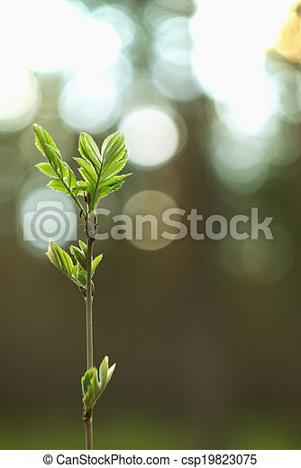 sole, albero, giovane, contro - csp19823075