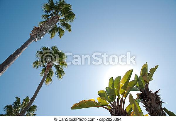 sole, albero, su, contro, dall'aspetto, banana - csp2826394
