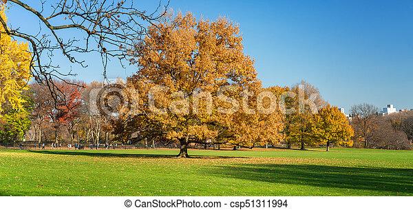 soleado, parque, otoño, central, día - csp51311994