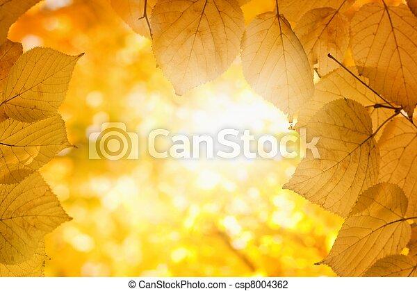 soleil, automne - csp8004362