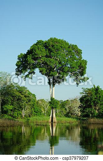solitaire, arbre - csp37979207
