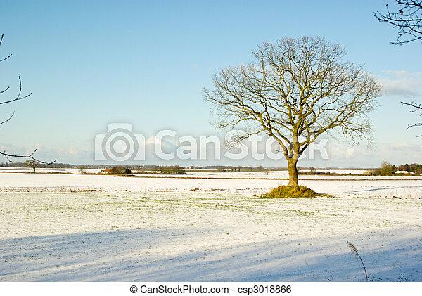solitaire, arbre - csp3018866