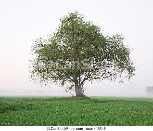 solitaire, arbre - csp4415346