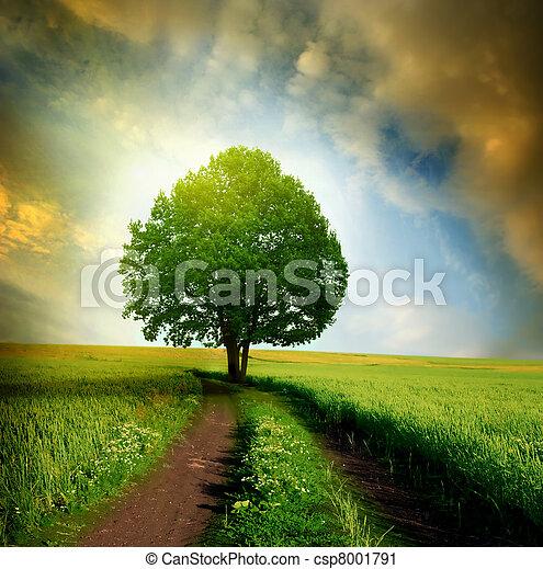 solitaire, arbre - csp8001791