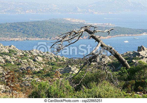 solitaire, arbre - csp22865251