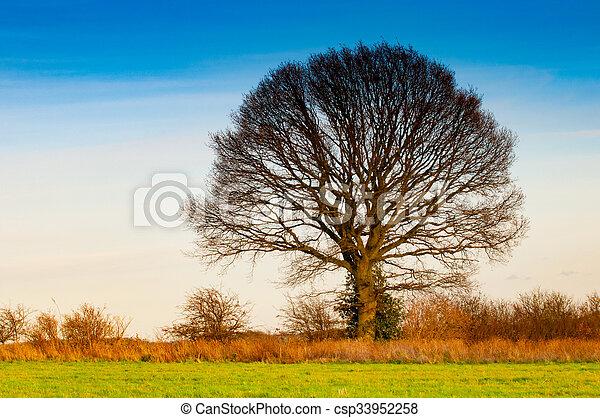 solitaire, arbre - csp33952258