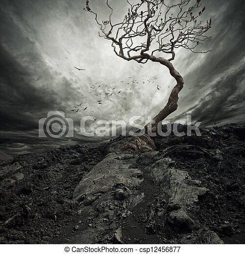 solitario, vecchio, cielo drammatico, albero., sopra - csp12456877