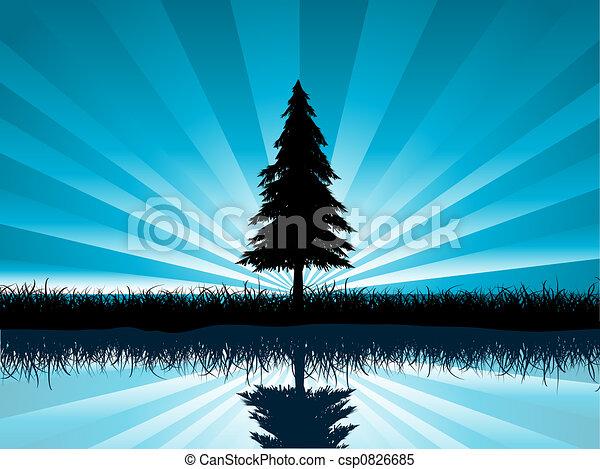 solitary fir tree - csp0826685