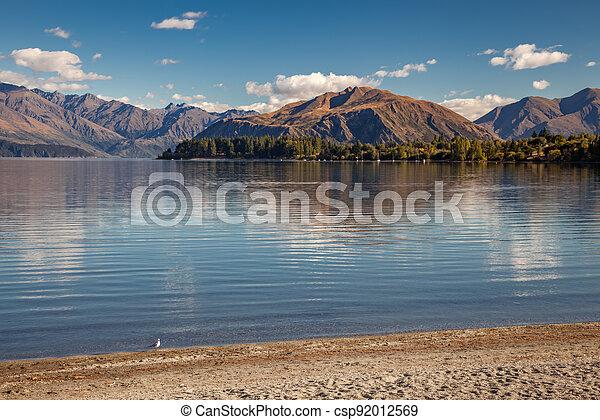 Solitary seagull on the shoreline of Lake Wanaka - csp92012569