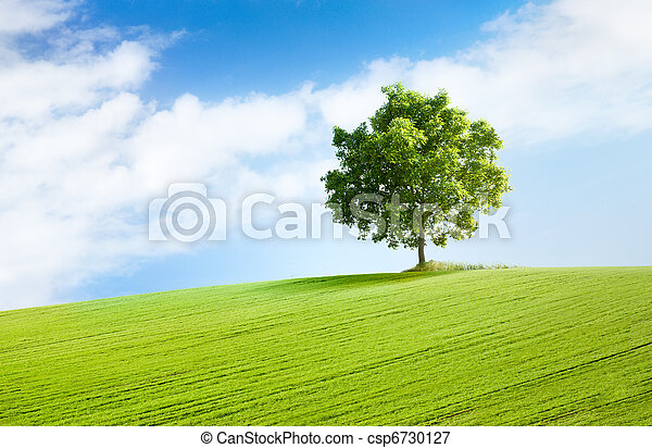 solitary tree in beautiful landscape - csp6730127