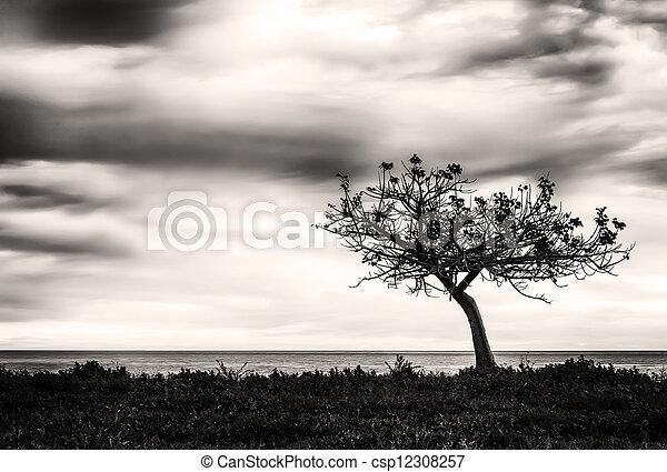 solitudine - csp12308257