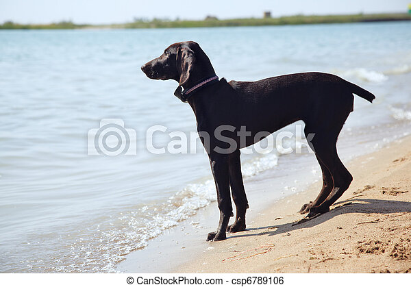 solitudine, cane - csp6789106