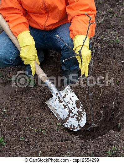 solo, árvore, resetting, jardineiro - csp12554299
