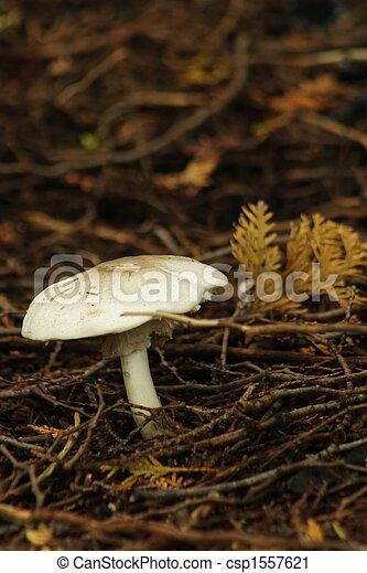 Un solo hongo en el suelo del bosque - csp1557621