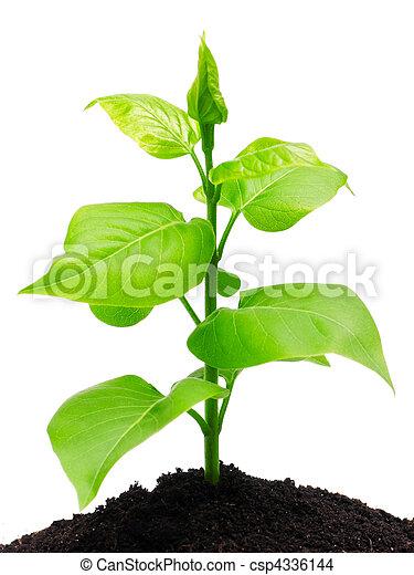 solo, planta - csp4336144