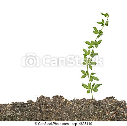 solo, planta - csp14635119