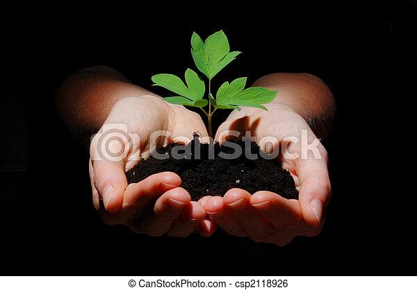 solo, planta, jovem, mãos - csp2118926