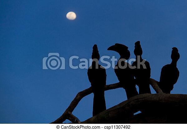 Sombras de pájaros - csp11307492
