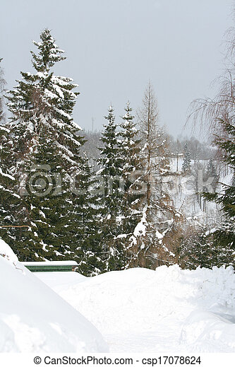 Some conifers under the snow in mountains - csp17078624