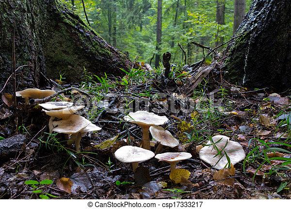 Some of autumnal fungi closeup - csp17333217
