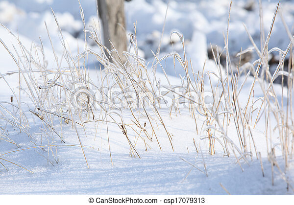 Some plants in beautiful hoarfrost - csp17079313