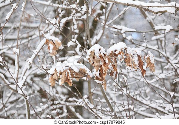 Some trees under the snow - csp17079045