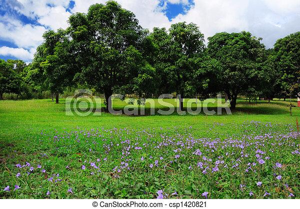 sommer, bäume, landschaftsbild - csp1420821