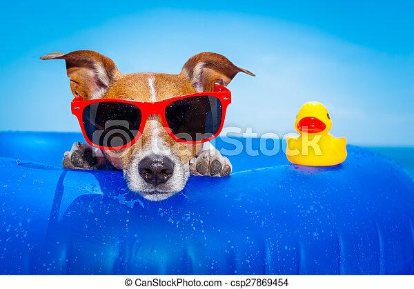 sommer feiertag, hund - csp27869454