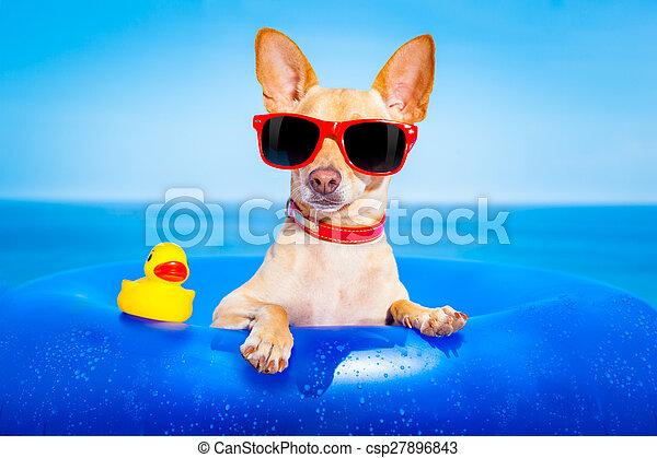 sommer feiertag, hund - csp27896843