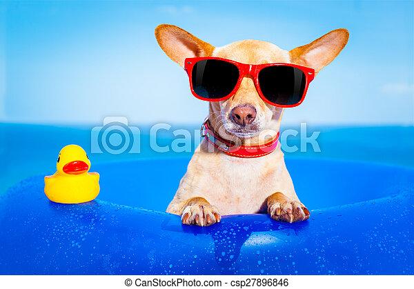 sommer feiertag, hund - csp27896846