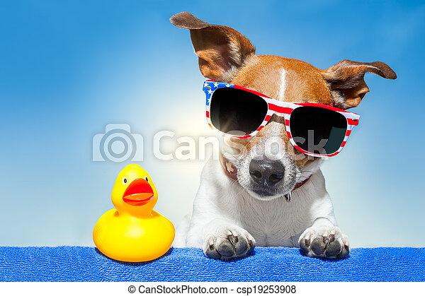 sommer feiertag, hund - csp19253908