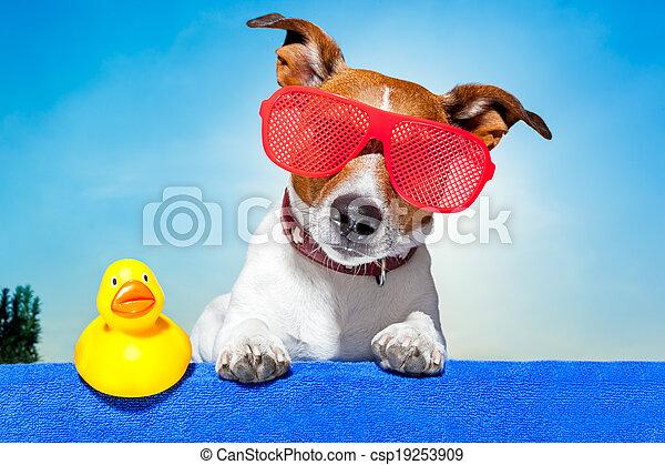 sommer feiertag, hund - csp19253909