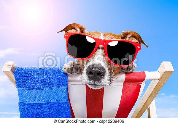 sommer feiertag, hund, urlaub - csp12289406