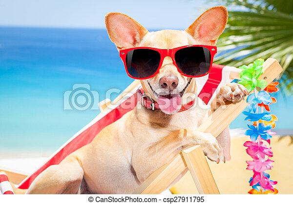 sommer feiertag, hund, urlaub - csp27911795